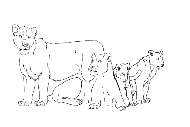 Sketch of a pride of Cave lions. Note the lack of manes on the big standing male. (Art by Tabitha Paterson)