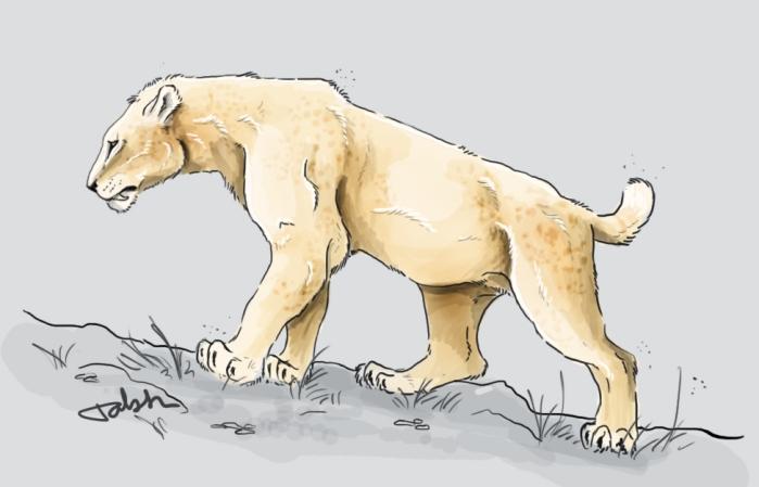 Homotherium latidens.