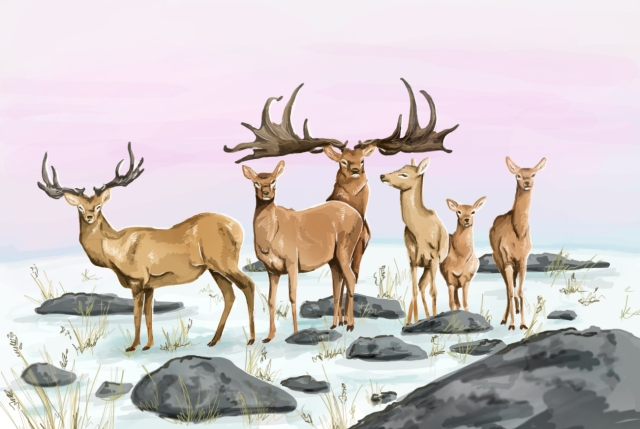 A herd of the giant Megaloceros giganteus.