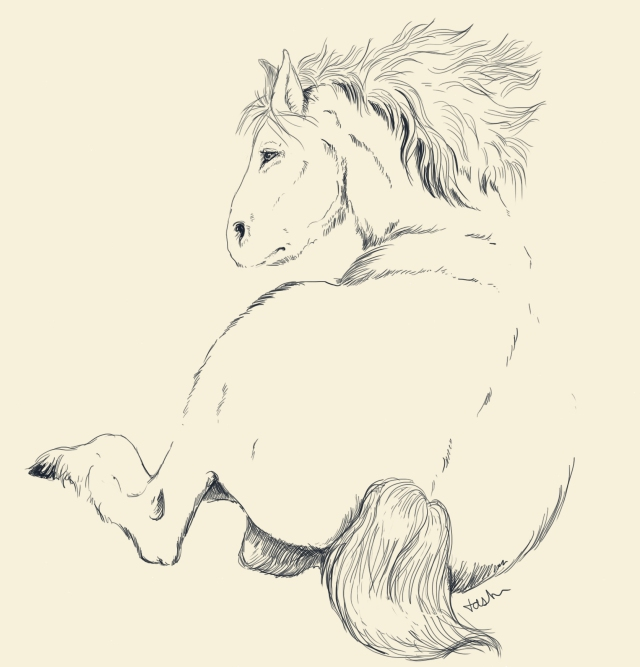 A sketch of a tarpan, (Art by Tabitha Paterson)