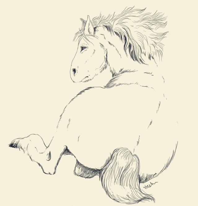 A sketch of a tarpan, (Art by Tabitha Paterson)