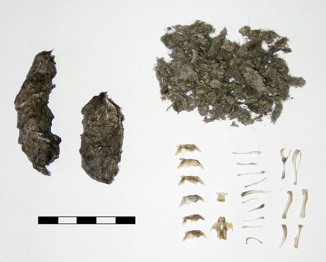 Owl pellets hold the clues to the awesome little creatures living around the owls home. (Image from here)