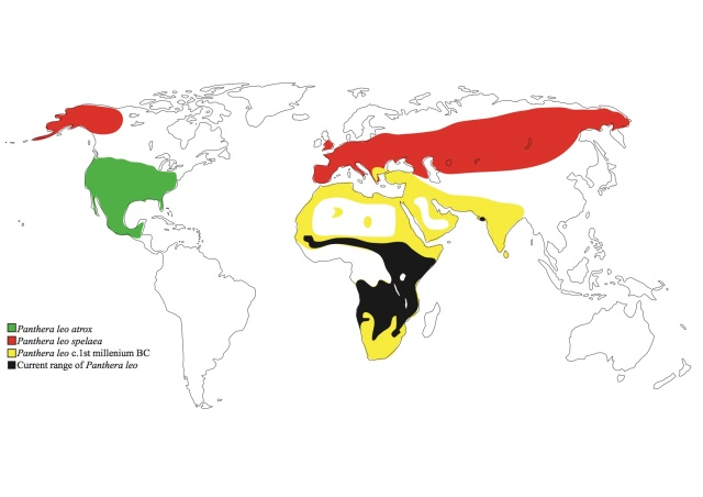 Range of lions since the Pleistocene. Image by Ross Barnett