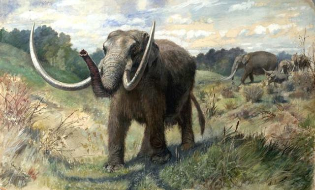 A magnificent Mastodon, illustrated by Charles Knight. (Image from here)
