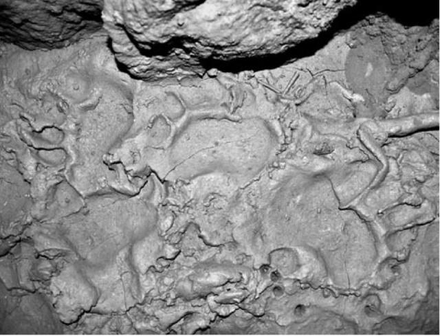 Spelaeusfootprints