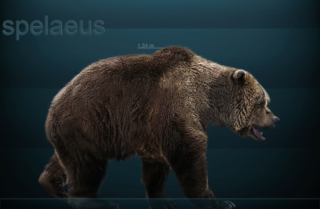 Reconstruction of a European Cave Bear (Ursus spelaeus) by Sergiodlarosa