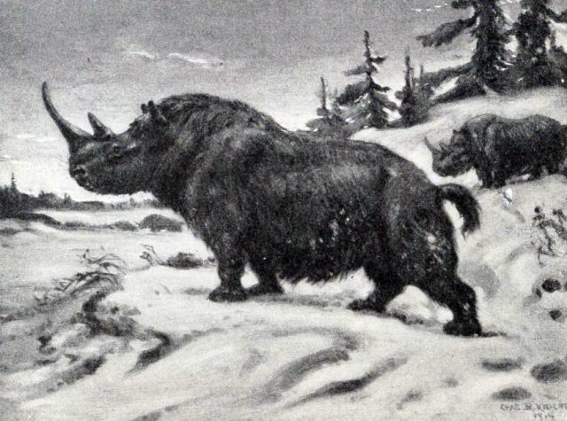 A Woolly Rhinoceros standing proudly by Charles Knight. (Image from here)