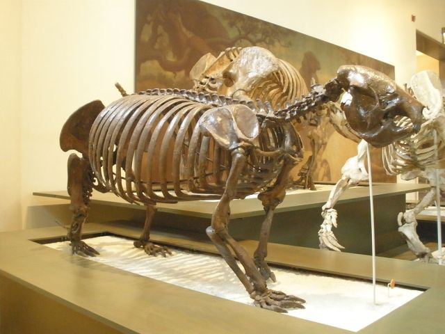 The Cuban ground sloth (Image from here)