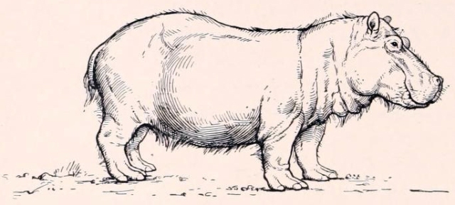 A beautifully simple illustration of Hippopotamus major, from the classic book 'Men of the Stone Age'. (Image from here)