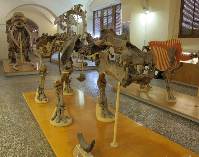 A truly gorgeous fossil skeleton of Hippopotamus antiquus at Florence Palaeontology Museum (Image from here)