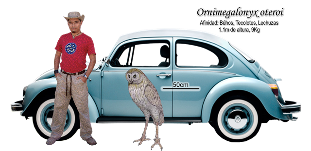 That is one big owl. Ornimegalonyx superimposed next to a man and a car. (Image from here -