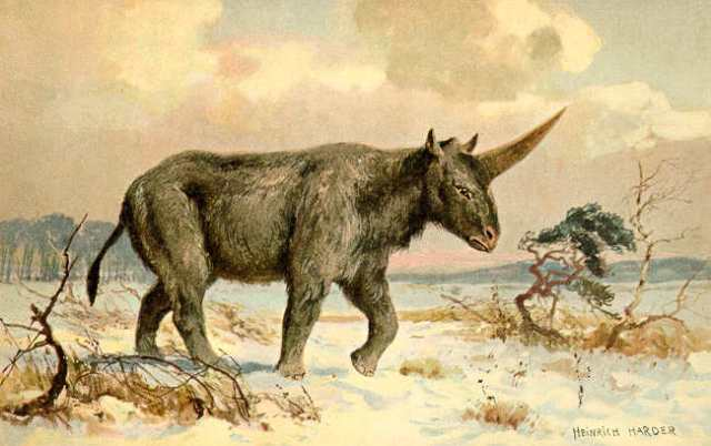 A lovely early illustration of Elasmotherium  (Image from here)