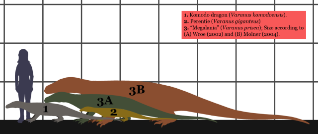 Two possible sizes of Megalina (Image from here)