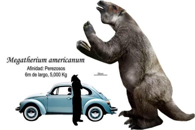 To see the true size of Megatherium, here is that classic blue VW Beetle with (Image from here)