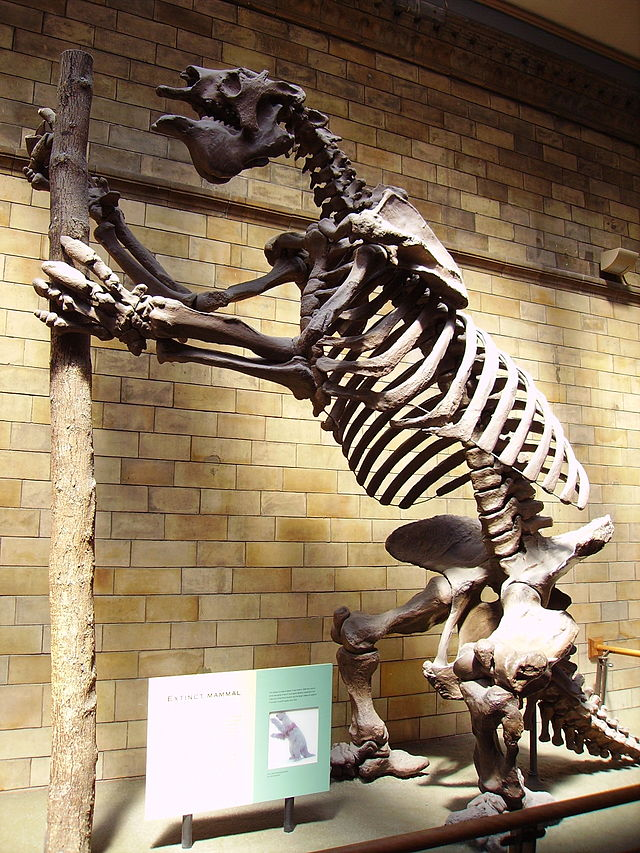 The truly awesome Goant Ground Sloth, Megatherium americanum (Image from here)