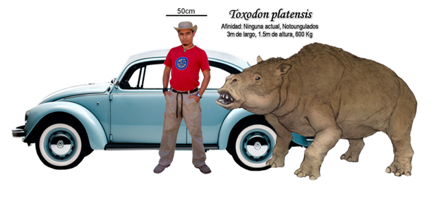 A familiar chap posing as a scale next to a wonderful Toxodon. (Image from here).