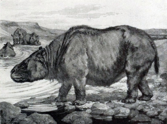 An old school illustration of Toxodon platensis. (Image from here)