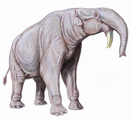 A wonderful illustration of Deinotherium showing it perculiar long legs, backwards curving tusks and thick trunk. (Image from here)