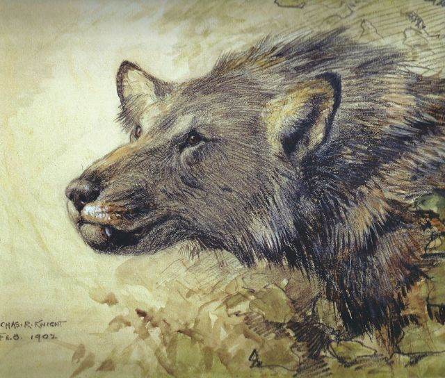 A gorgeous illustration of Borophagus (possibly B. diversidens). Illustrated by the ultra talented palaeoartist Charles Knight in 1902. (Image from here)