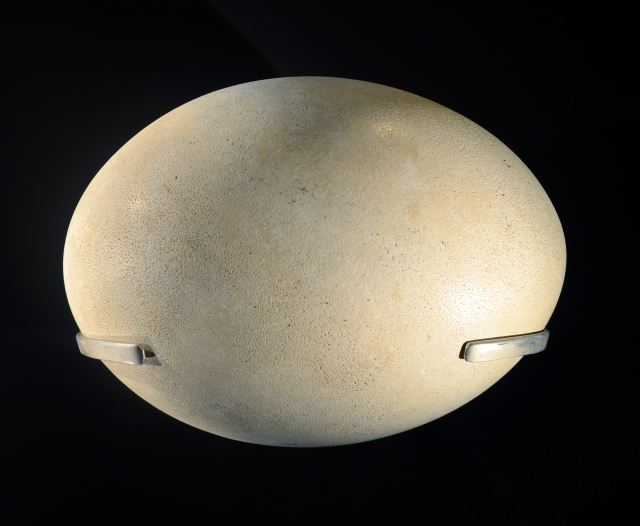 Aepyornis egg in the MNHN, Paris. Public Domain