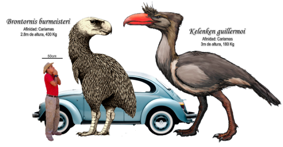 Two big South American Terror Birds (Phorusrhacidae). (Image by Roberto Díaz Sibaja. Image from here)