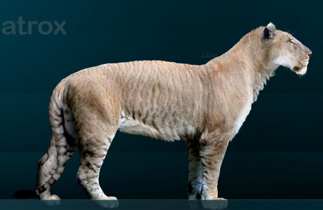 American lion reconstruction by Sergiodlarosa via Wikimedia Commons