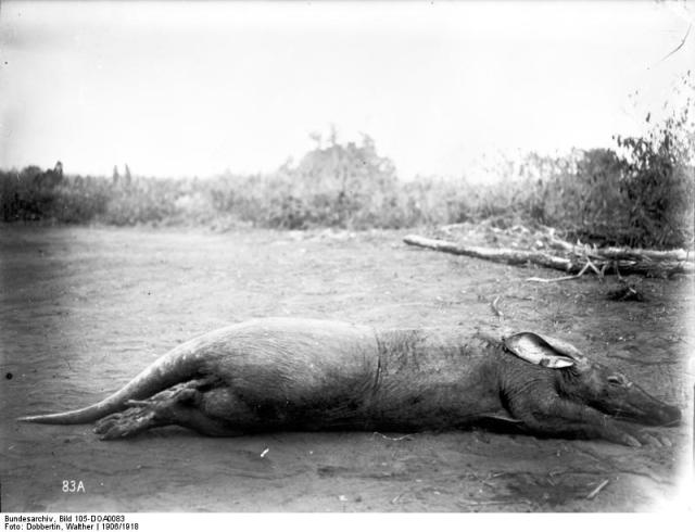 The Aardvark. Public domain image