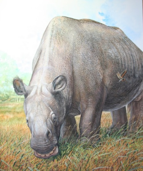 Analysis of collagen preserved in fossils reveals that the unusual native ungulates of South America (such as Toxodon platensis, seen here) were more closely related to perissodactyls (horses and their allies) than to other extant placentals. (Illustration © Peter Schouten)