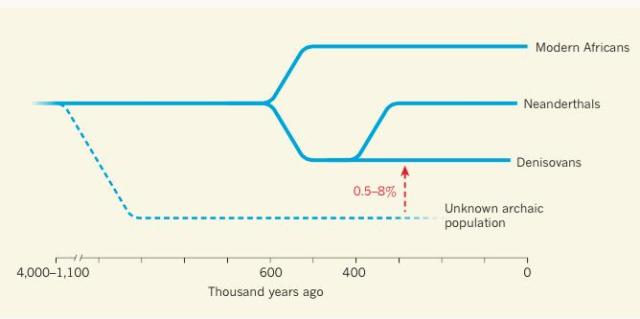 Gene Flow from an Unknown Ancient Population (Image from Birney & Pritchard, 2014).
