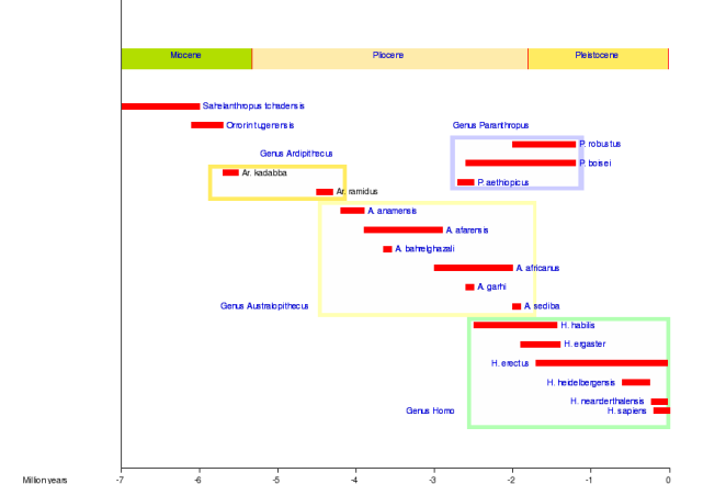 The several species of hominins through time (Image from Wiki Commons)