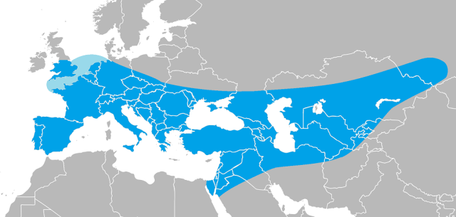 "A nice illustration showing the range of Hoo neanderthalensis. (Image ""Range of Homo neanderthalensis"" by I, Ryulong. Licensed under CC BY-SA 3.0 via Wikimedia Commons - http://commons.wikimedia.org/wiki/File:Range_of_Homo_neanderthalensis.png#/media/File:Range_of_Homo_neanderthalensis.png)"