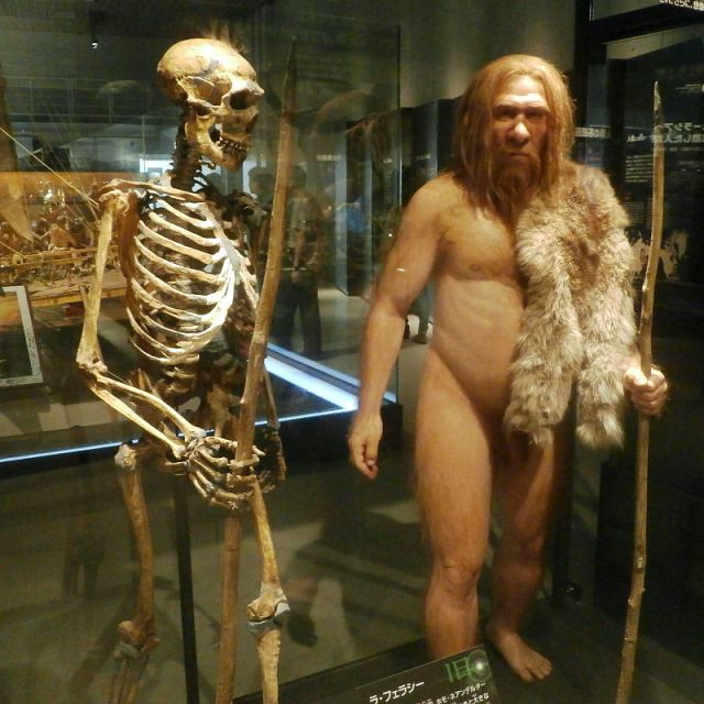 "A complete skeleton of Neanderthal, with a model next to it. (Image ""Skeleton and restoration model of Neanderthal La Ferrassie 1"" by Photaro - Own work. Licensed under CC BY-SA 3.0 via Wikimedia Commons - http://commons.wikimedia.org/wiki/File:Skeleton_and_restoration_model_of_Neanderthal_La_Ferrassie_1.jpg#/media/File:Skeleton_and_restoration_model_of_Neanderthal_La_Ferrassie_1.jpg"