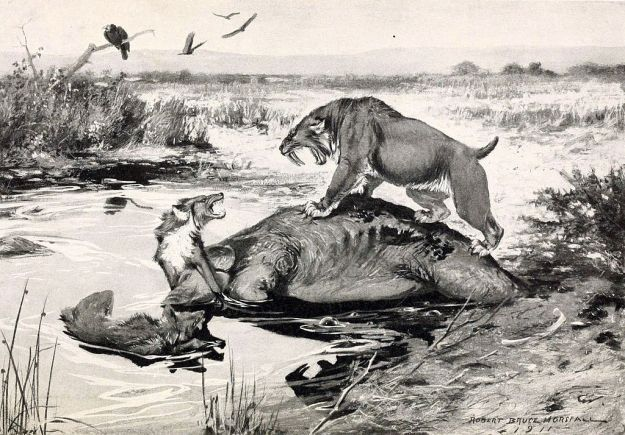 "A classic illustration of La Brea Tar Pits. ""Smilodon and Canis dirus"" by Robert Bruce Horsfall - http://archive.org/stream/historyoflandmam00scot#page/n9/mode/2up. Licensed under Public Domain via Wikimedia Commons - http://commons.wikimedia.org/wiki/File:Smilodon_and_Canis_dirus.jpg#/media/File:Smilodon_and_Canis_dirus.jpg"