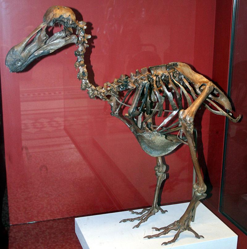 The last squawk of the dodo (4/5)
