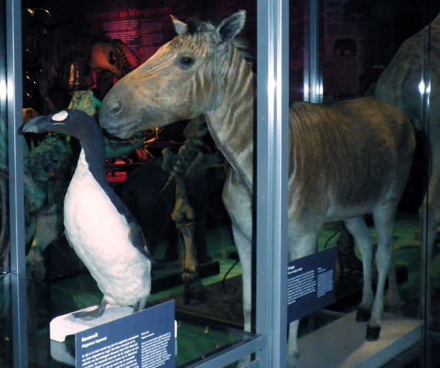 """Quagga exhibit Leiden"" by Konstantin Kirilov - Own work. Licensed under CC BY-SA 3.0 via Commons - https://commons.wikimedia.org/wiki/File:Quagga_exhibit_Leiden.jpg#/media/File:Quagga_exhibit_Leiden.jpg"