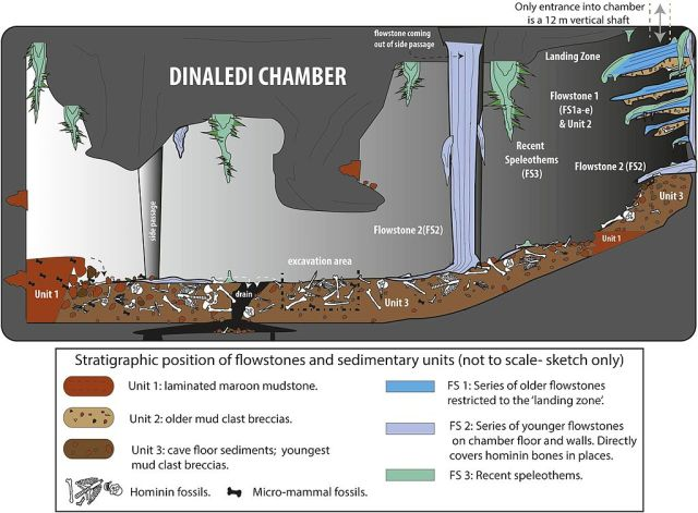 """Cartoon illustrating the geological and taphonomic context and distribution of fossils, sediments and flowstones within the Dinaledi Chamber"" by Paul H. G. M. Dirks et al - http://elifesciences.org/content/4/e09561. Licensed under CC BY 4.0 via Commons - https://commons.wikimedia.org/wiki/File:Cartoon_illustrating_the_geological_and_taphonomic_context_and_distribution_of_fossils,_sediments_and_flowstones_within_the_Dinaledi_Chamber.jpg#/media/File:Cartoon_illustrating_the_geological_and_taphonomic_context_and_distribution_of_fossils,_sediments_and_flowstones_within_the_Dinaledi_Chamber.jpg"