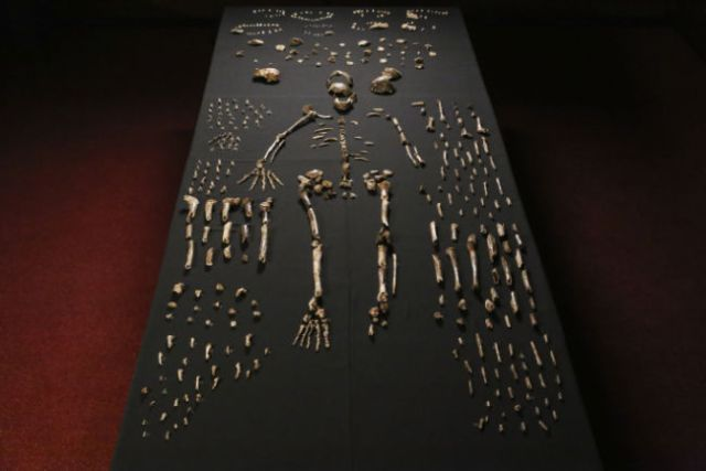 cOMPOSITE SKELETON OF
