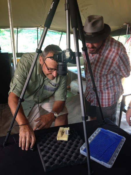 Peter Schmid documents fossils in the Science Tent, while John Hawks looks on. (Image K Lindsay Hunter)