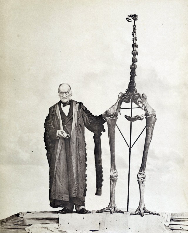 Richard Owen and a Dinornis moa. He holds in his hand the bone from which he first deduced the existence of moa in New Zealand. Public domain image via Wikimedia Commons