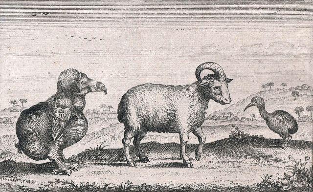 By Pieter van den Broecke (d. 1640), ascribed to printmaker Adriaen Matham. Etching, engraving. - http://www.rijksmuseum.nl/collectie/RP-P-OB-75.463/verschillende-lokale-diersoorten-waaronder-een-dodo-1624, Public Domain, $3