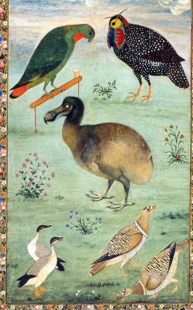 Dodo among Indian birds, by Ustad Mansur, c. 1625; perhaps the most accura