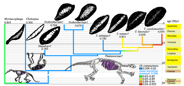 Time-calibrated Phylogeny