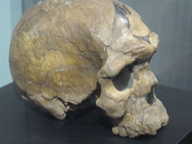 One of the earlierst Homo sapiens fossils, the