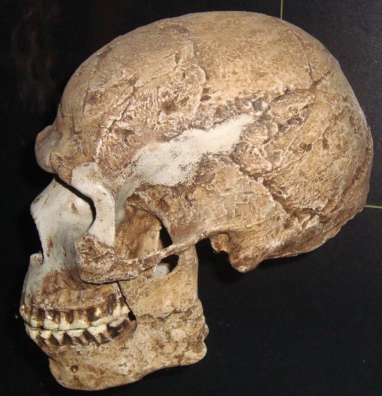Skhul/Quafzeh Skull number 5