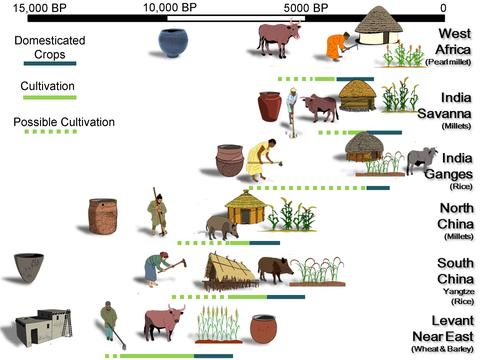 A comparative timeline of the origins of agriculture and associated technologies. Drawn by Dr. Chris Stevens as part of the ComPAg project.