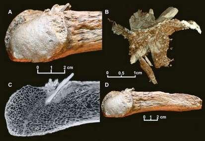mastodon4
