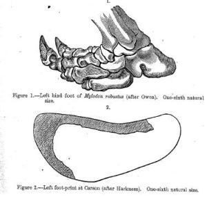 mylodontracks