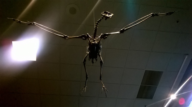 The beautiful skeleton of a Monster Bird on display in the Page Museum. (Photo by author)