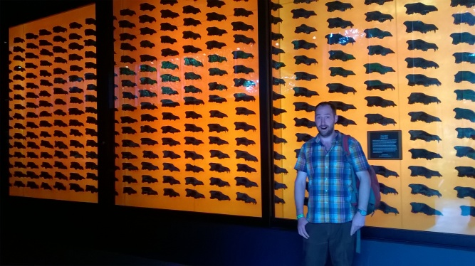 The incredible wall of around 400 dire wolf skulls on display in the Page Museum