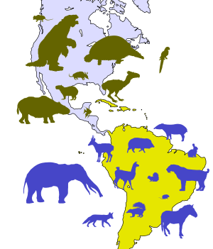 The Great American Interchange showing the creatures that moved to explore new lands.
